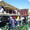 Farmlabor Transportation