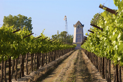 Grape vineyard with vintage water tower
